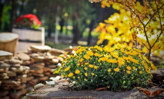 Работы в саду и огороде по весне – что делать?